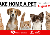 Help Clear the Shelters August 19